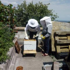 Allotment and Bee-keeping
